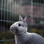 Conejos: 10 consejos y cuidados básicos