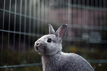 10 consejos y cuidados para tus conejos