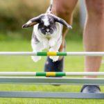 KANINHOP: entrenamiento para desarrollar agilidad en conejos