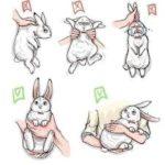 Como sujetar a un conejo correctamente