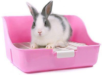 caja de arena para conejos