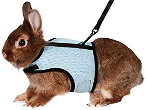 arnes y correa de conejo