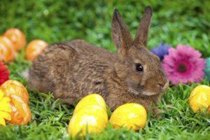conejo de pascua huevos