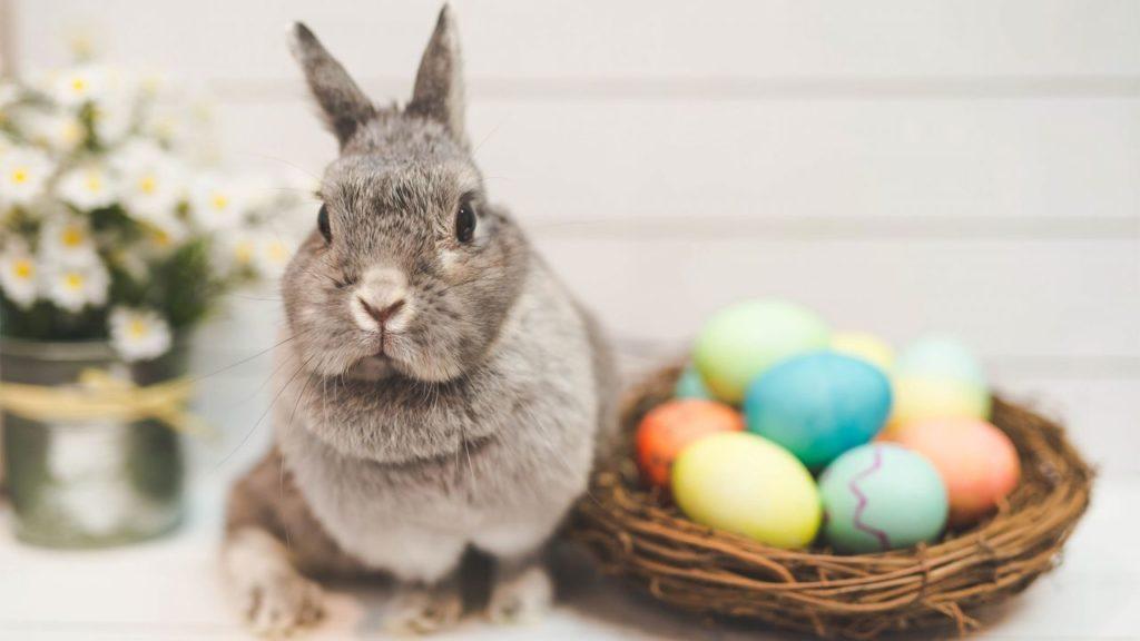 conejos de pascua historia