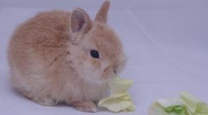 anorexia conejos