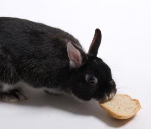 conejo negro comiendo pan