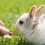 El conejo no come: ¿qué hacer?