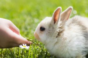 conejo no come