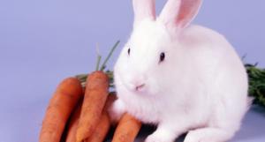 conejo y zanahorias