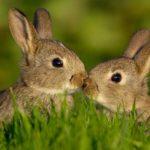 ¿Es posible alimentar a los conejos con pan?
