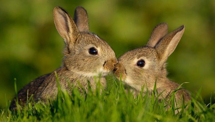 conejo puede comer pan
