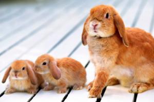 mama y cachorros conejos