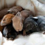 La mama no alimenta a sus conejitos: ¿Qué hacer?