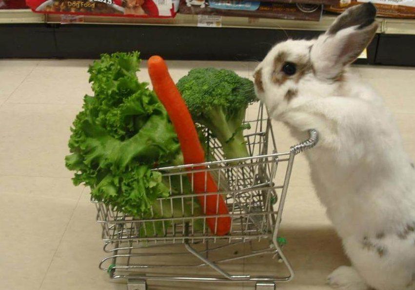 alimentos prohibidos para los conejos