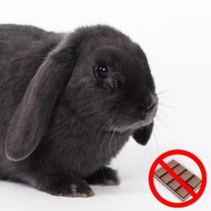 chocolate prohibido para los conejos