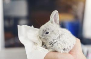 conejo bebé resfriado
