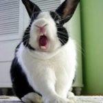 Mi conejo muerde: ¿Qué hacer?