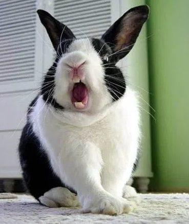 mi conejo muerde que hacer?