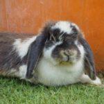 Estornudos de conejo: que hacer y cómo tratarlo