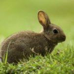 Mi conejo tiene ojos llorosos ¿qué hacer?