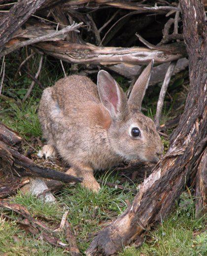 cuanto vive un conejo