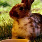 ¿Cuánto cuesta mantener un conejo como mascota?