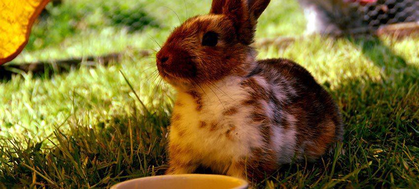 cuanto cuesta mantener un conejo