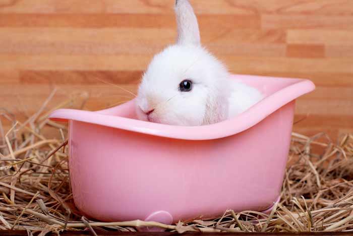como bañar un conejo
